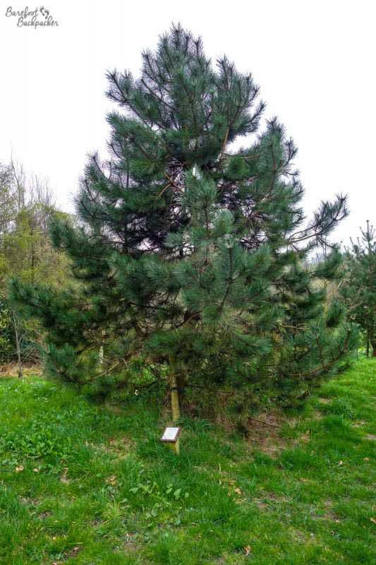 Tree in the Memorial Garden in Horwich