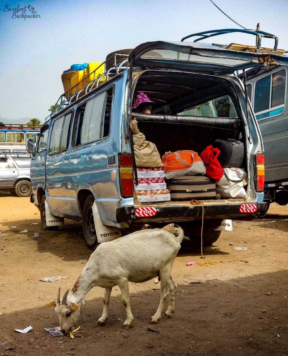 Bus in Togo - the cross-border shuttle, complete with goat.