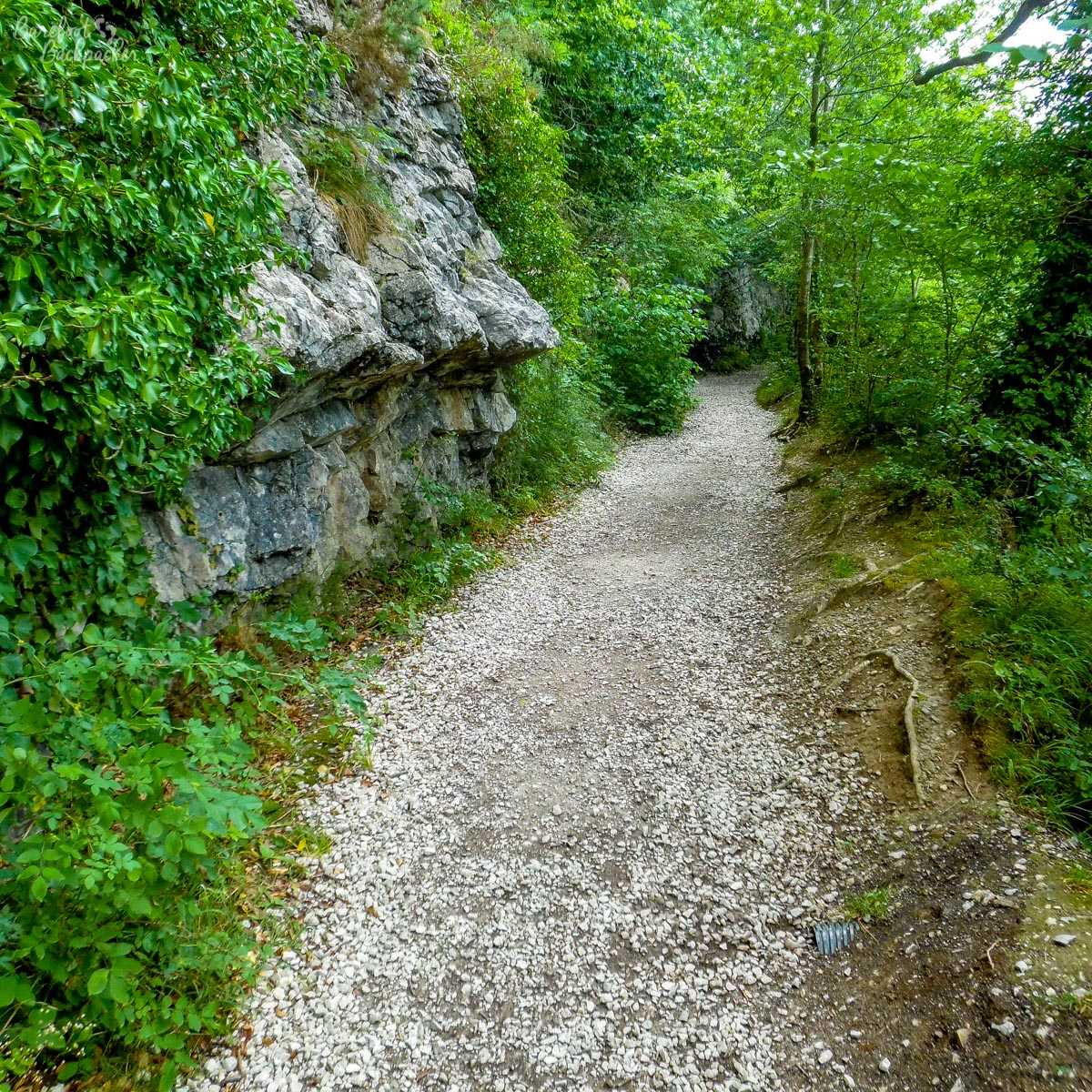 Path through Loggerheads Country Park