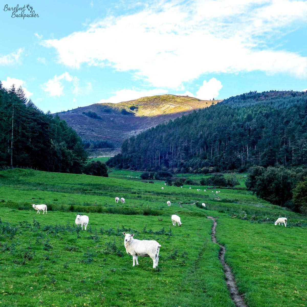 Moel Famau in the distance