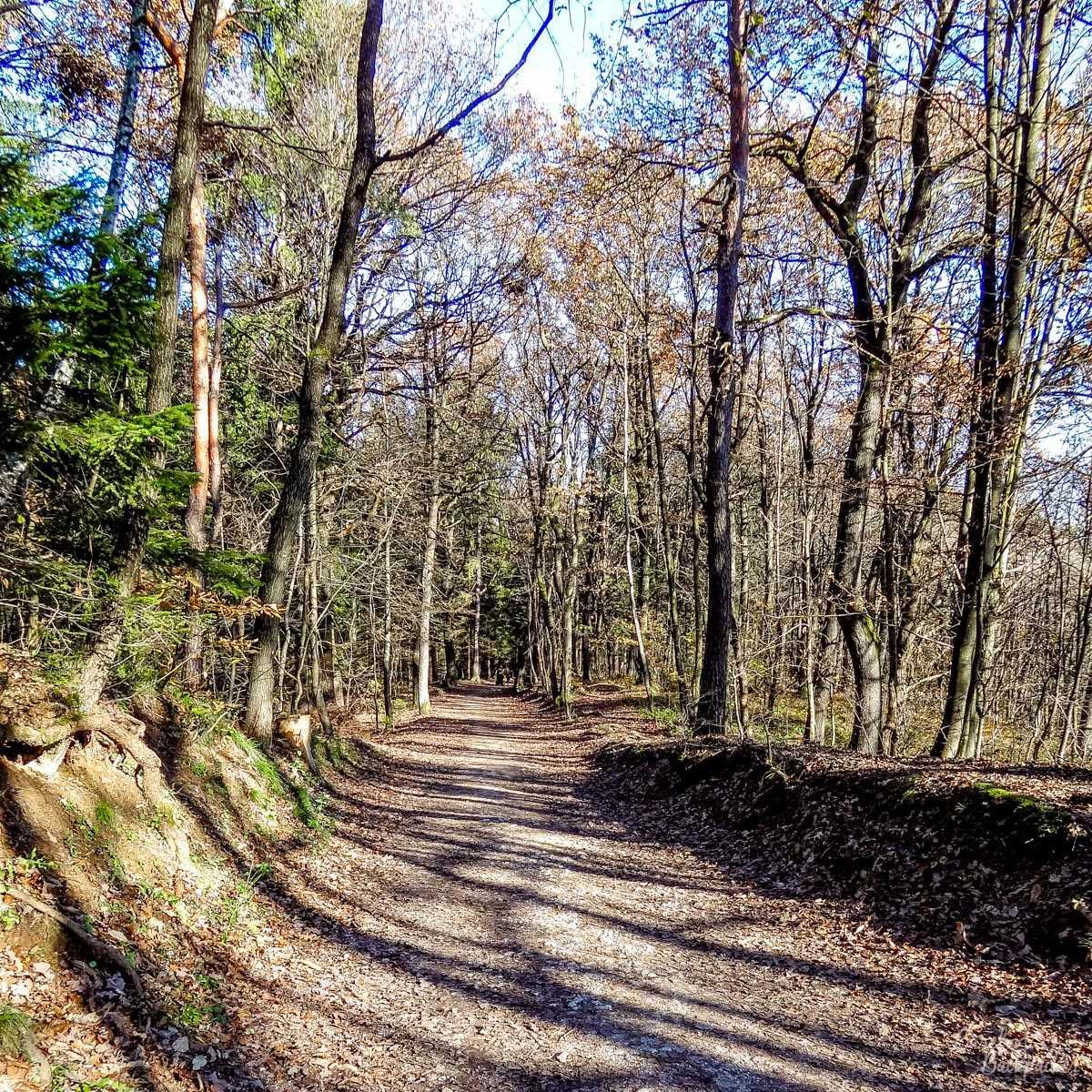 Forest path in Tivoli, Ljubljana