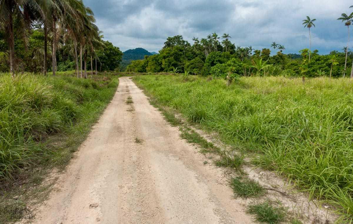 Road on Malekula, Vanuatu.