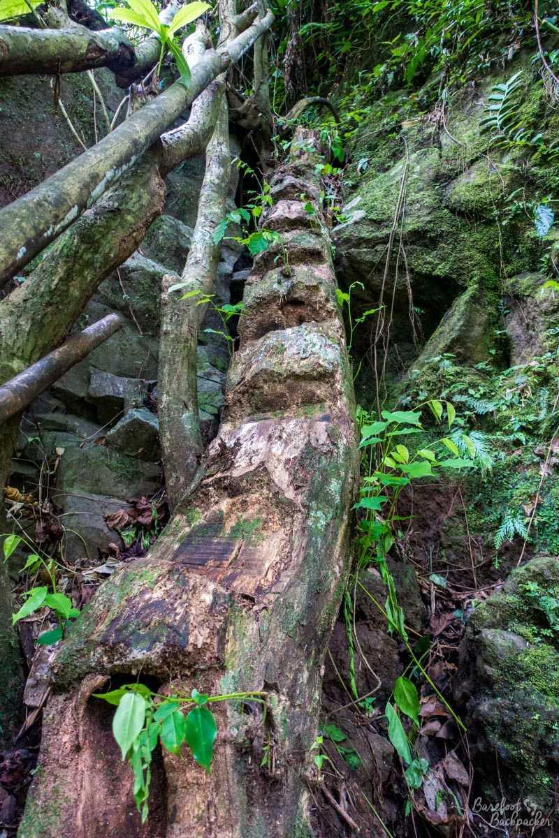 Tree-trunk ladder, Gaua.
