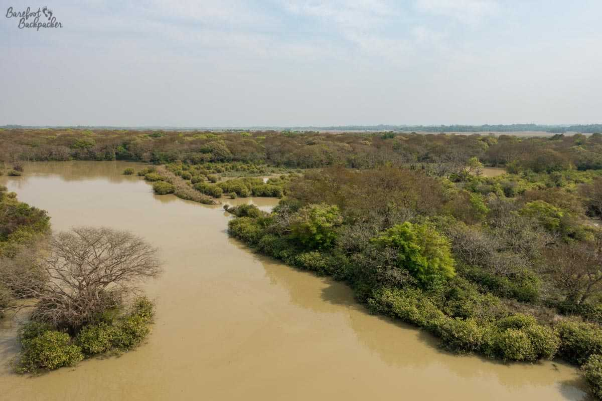 Overview of the Ratargul swamp forest from the lookout tower.