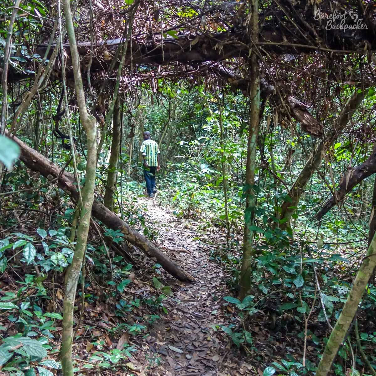 The rainforest walk in Kakum National Park, Ghana