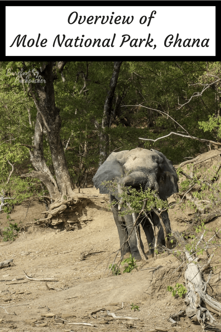 An elephant inviting you to read an overview about Mole National Park, Ghana.