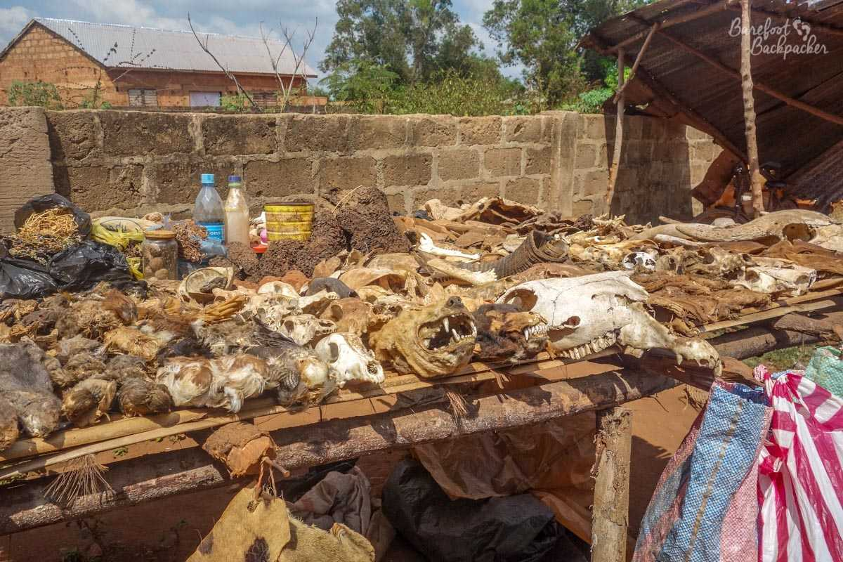 Typical stall at a fetish market in Abomey – trays of dead animal bones  (mainly goat heads), twigs, and miscellaneous things in jars at the back that I daren't think about.