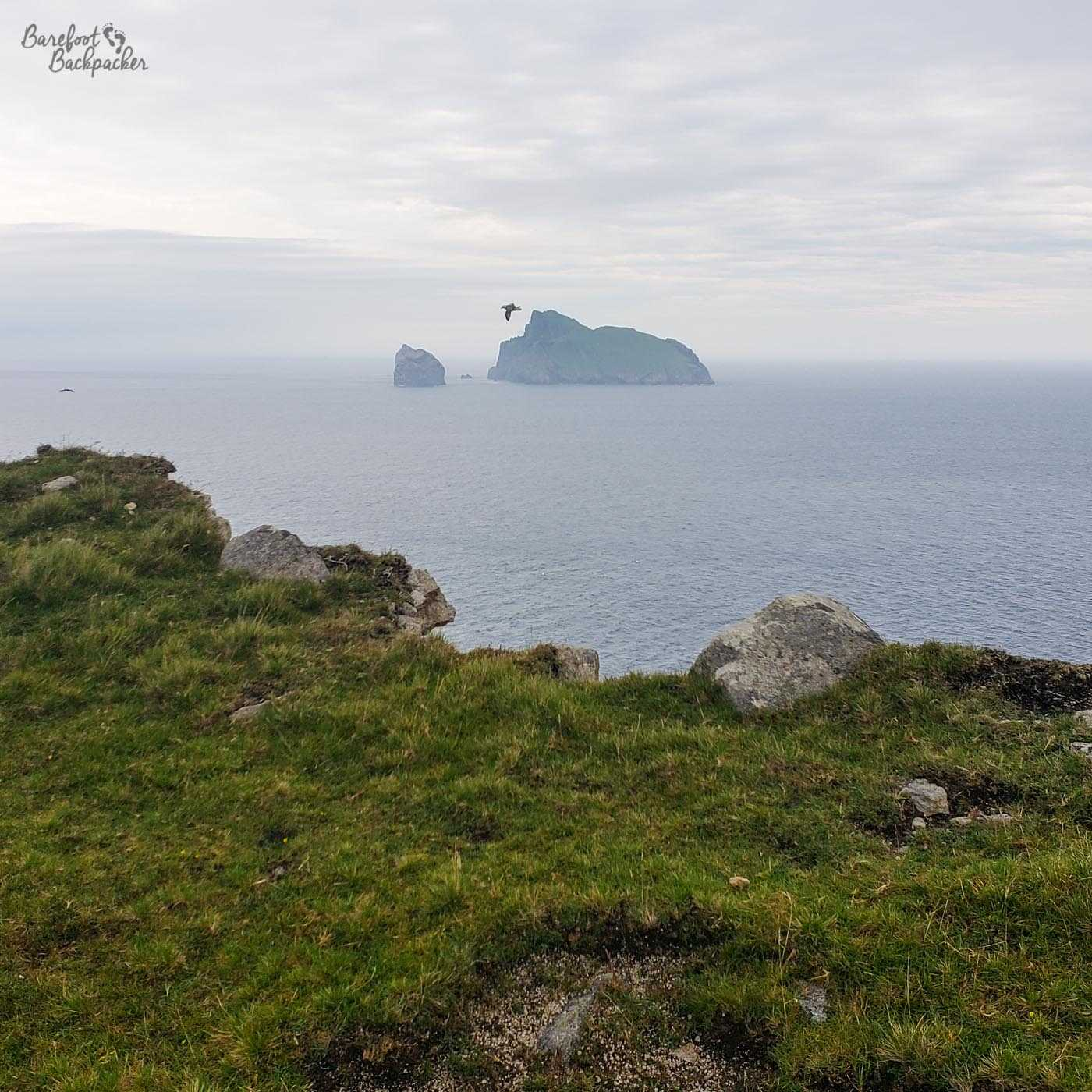 Looking out to one of the rock stacks from a hill on Hirta. There is a bird swooping nearby.