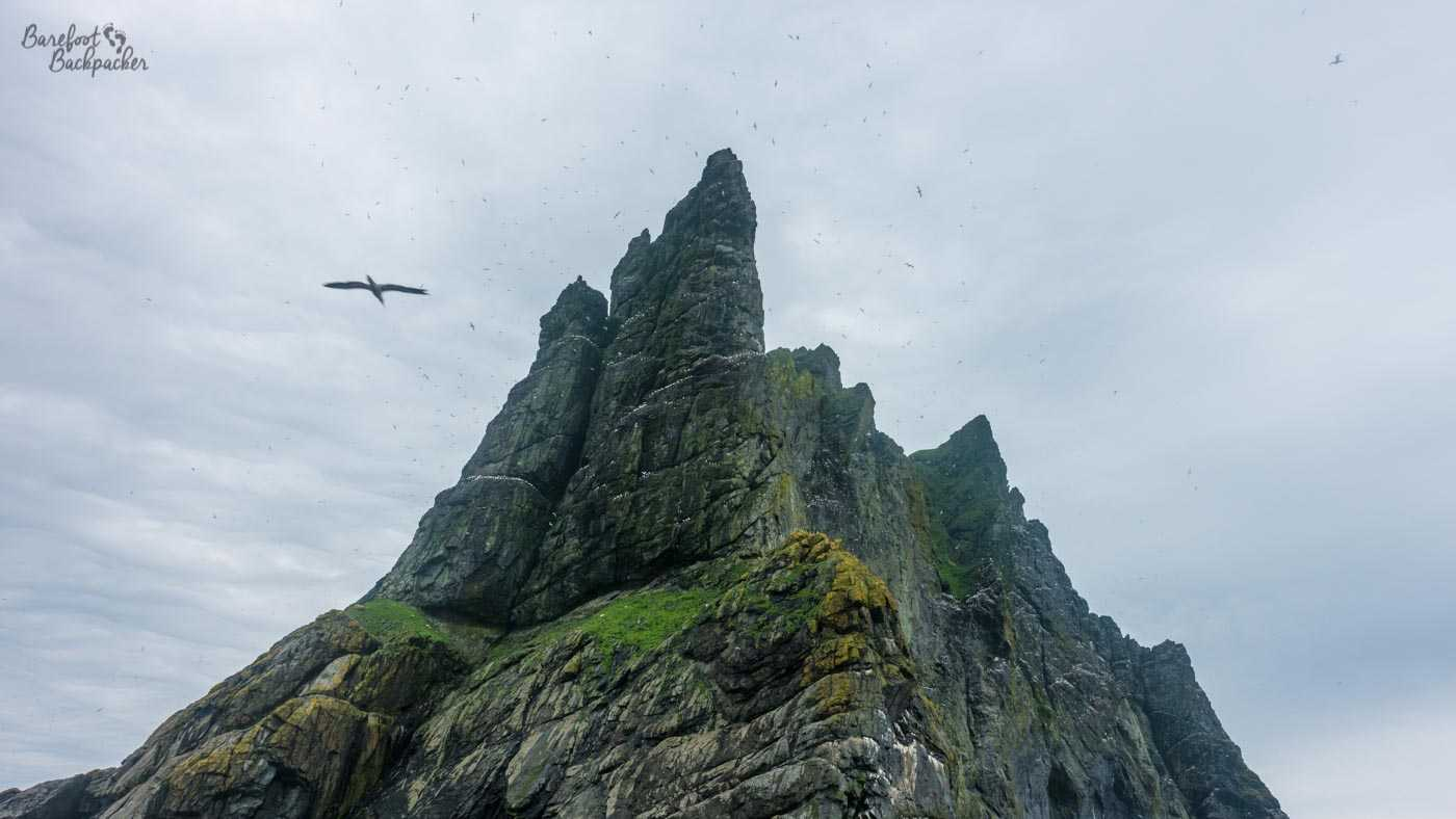 Birds flying around one of the rock stacks [large rock columns and islets that are scattered around the sea] in the St Kilda archipelago. Lots of birds.