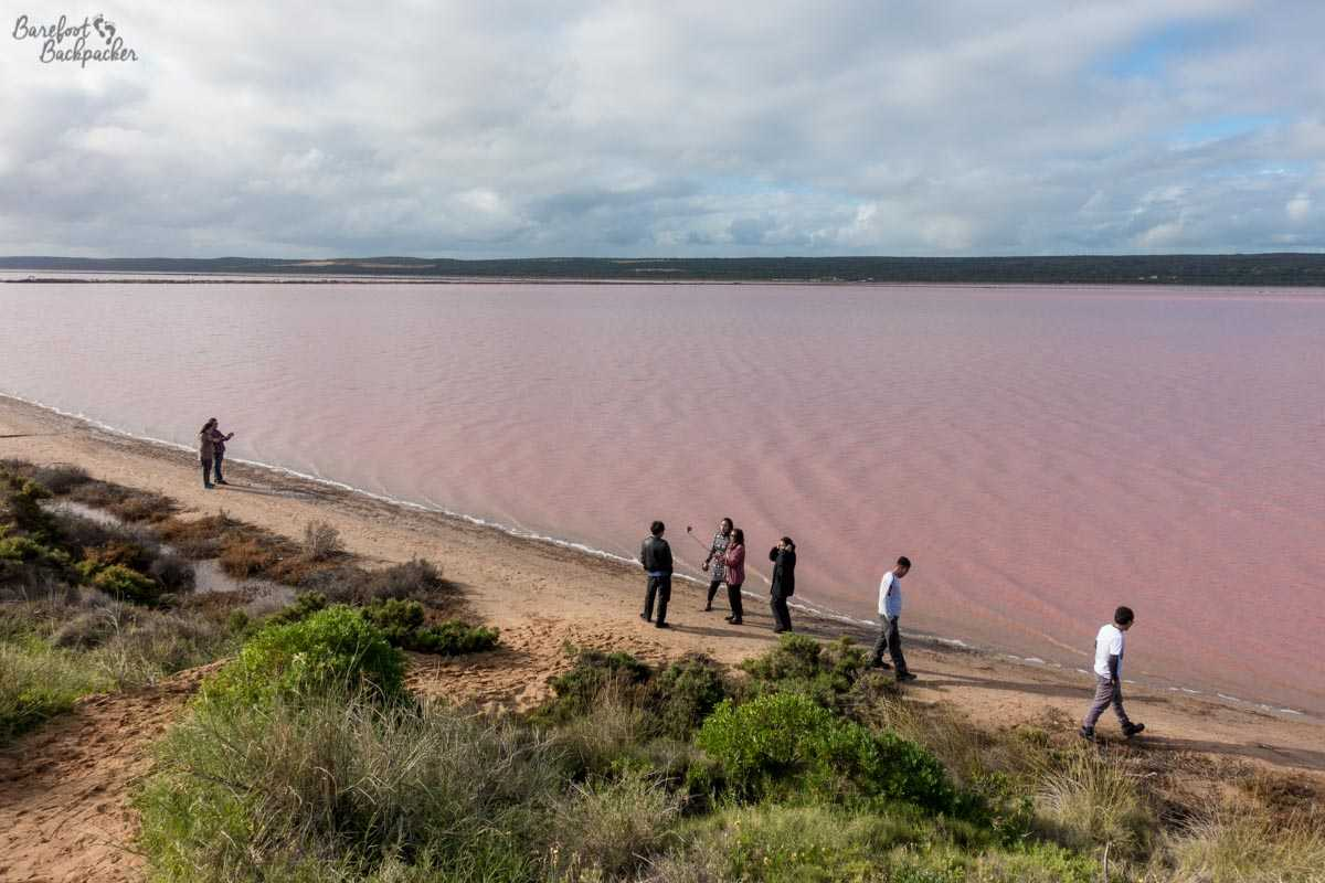 People taking pictures of Hutt Lagoon, the pink lake in Western Australia; taken from above so showing a bit of what might be described as 'a beach' at the shoreline.