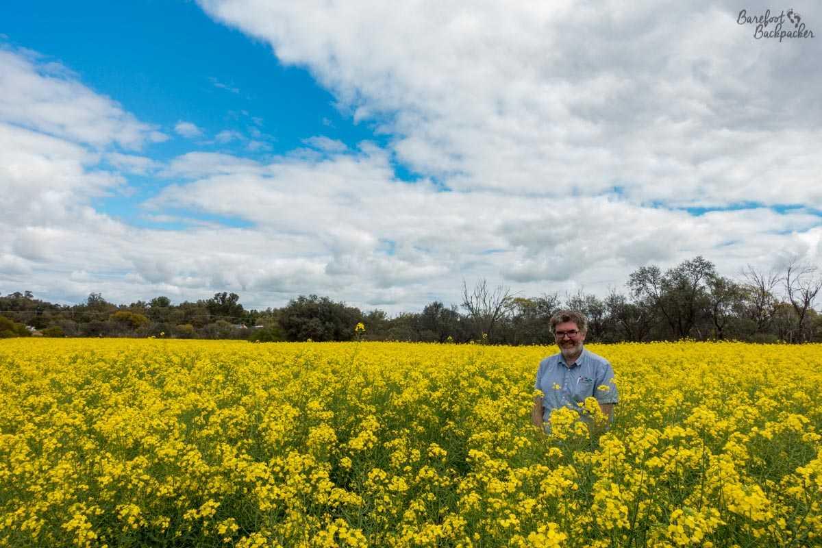 Everlastings / Wildflowers in Western Australia.