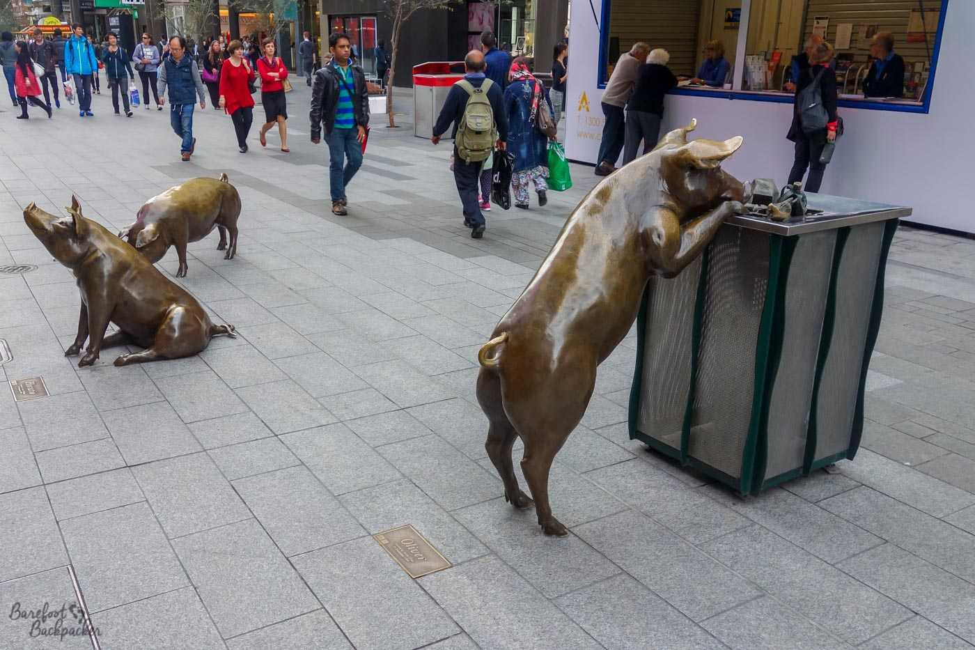 The pigs of the 'A Day Out' sculpture, well three of them at least. One is sitting down, one seems to be snuffling at the ground, while a third is standing with his front trotters peering into one of the rubbish bins.