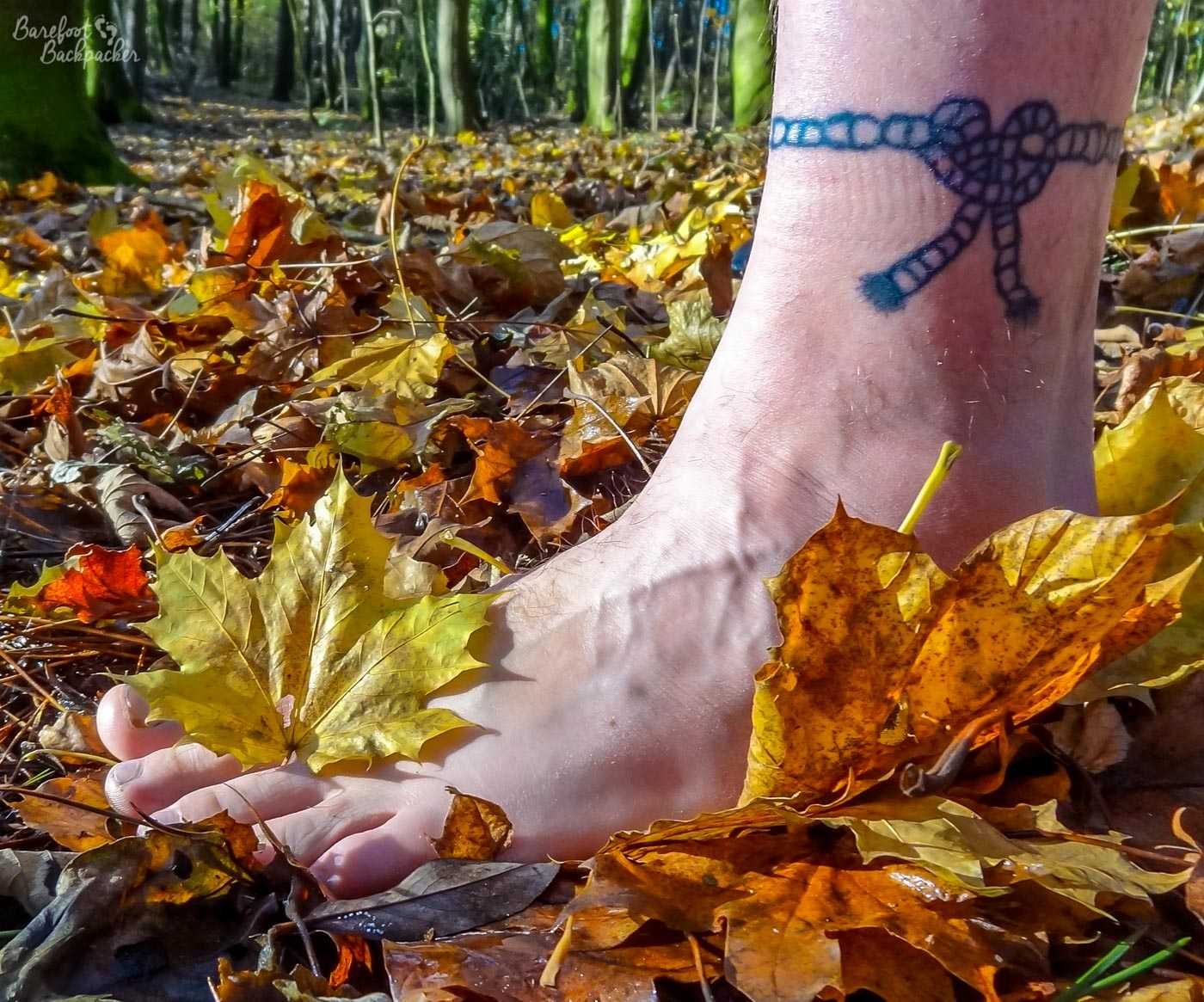 A close-up of a bare foot stepping in orange autumnal leaves on the ground, in a woodland. There are lots of trees in the background. Above the ankle on the foot is a blue-ish tattoo in a rope motif. The knot of the rope isn't technically valid but no-one cares.