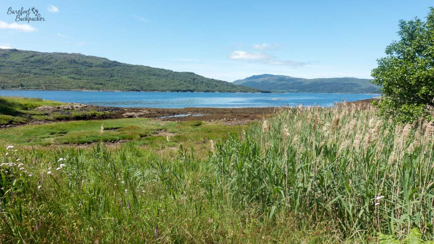 Low-lying green reeds in the foreground give way to a flat, blue, loch. There are dark green hills in the distance. I guess the difference between this and the other pictures of lochs is it feels much more low-lying; there's less of a drop to get to the shoreline.
