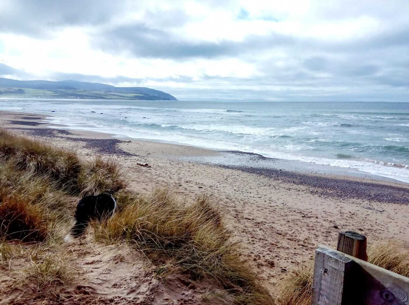 A dog snuffles around at the edge of some sand dunes, but a wide and empty pale sand beach is the centre of the picture, with low-rise waves coming in on the sea. There are distant hills to the left, because this is Scotland and there are always distant hills.
