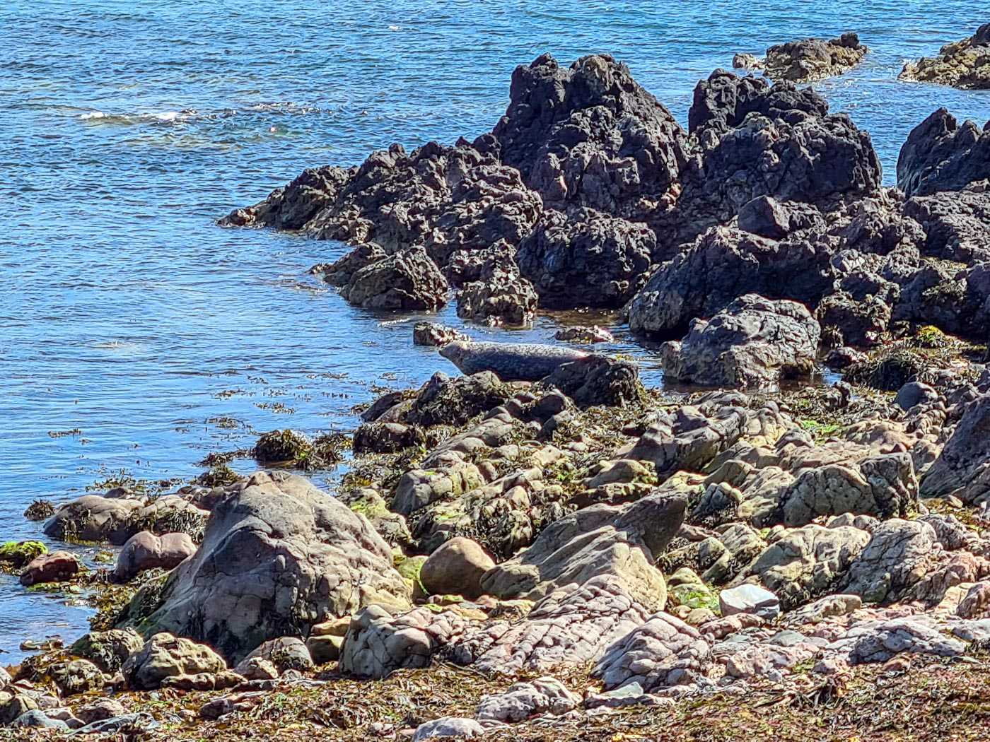 Rocks by the sea. There are allegedly seals on these rocks. I can just see rocks. But then I don't do animals.