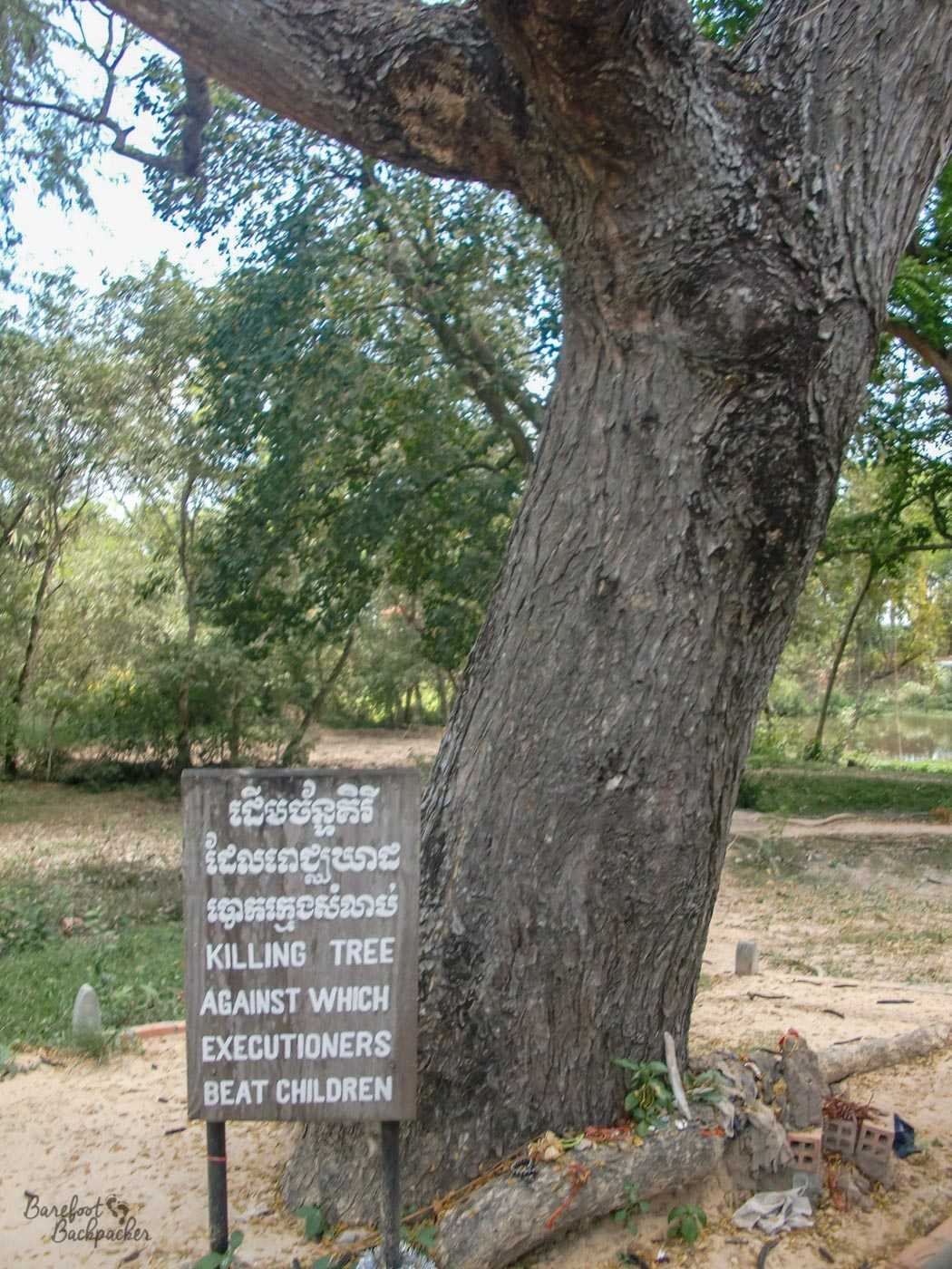 A large tree with a thick trunk and which seems to divide into several not much smaller trunks just up out of shot. By the side of the tree is a sign that says 'Killing tree against which executioners beat children'. One of the paintings in Tuol Sleng displayed how this took place.