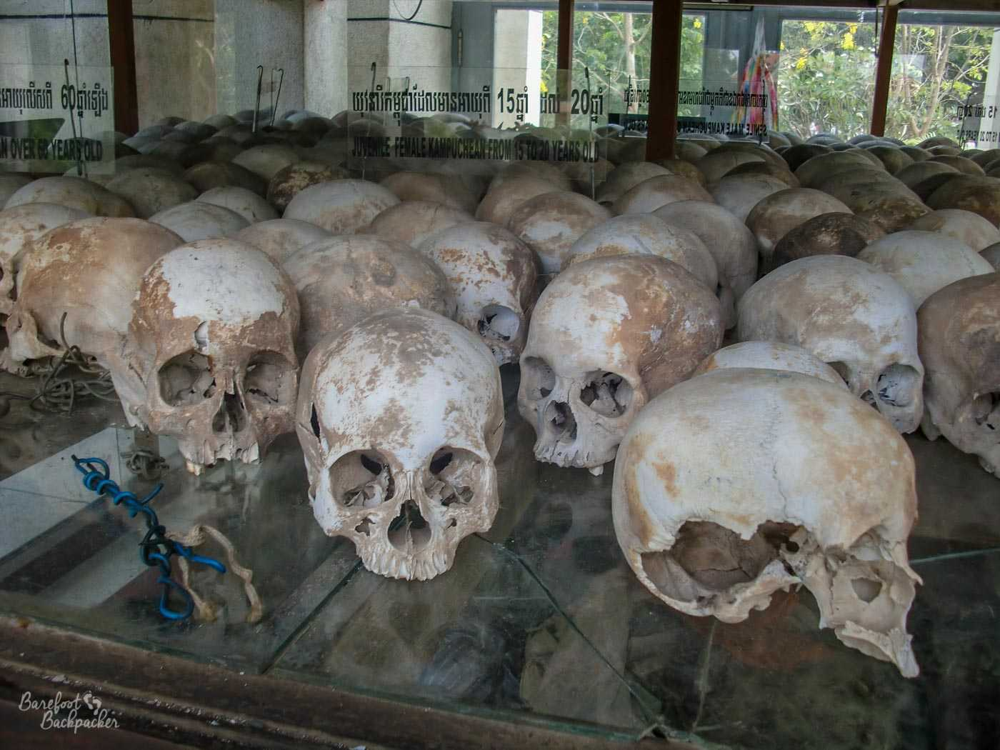 Close-up of a set of skulls in the stupa, behind a glass window. There are too many to count, and this is just one shelf – the stupa has at least six with large ceiling space. A sign here says 'Juvenile female Kampuchean from 15 to 20 years old'.
