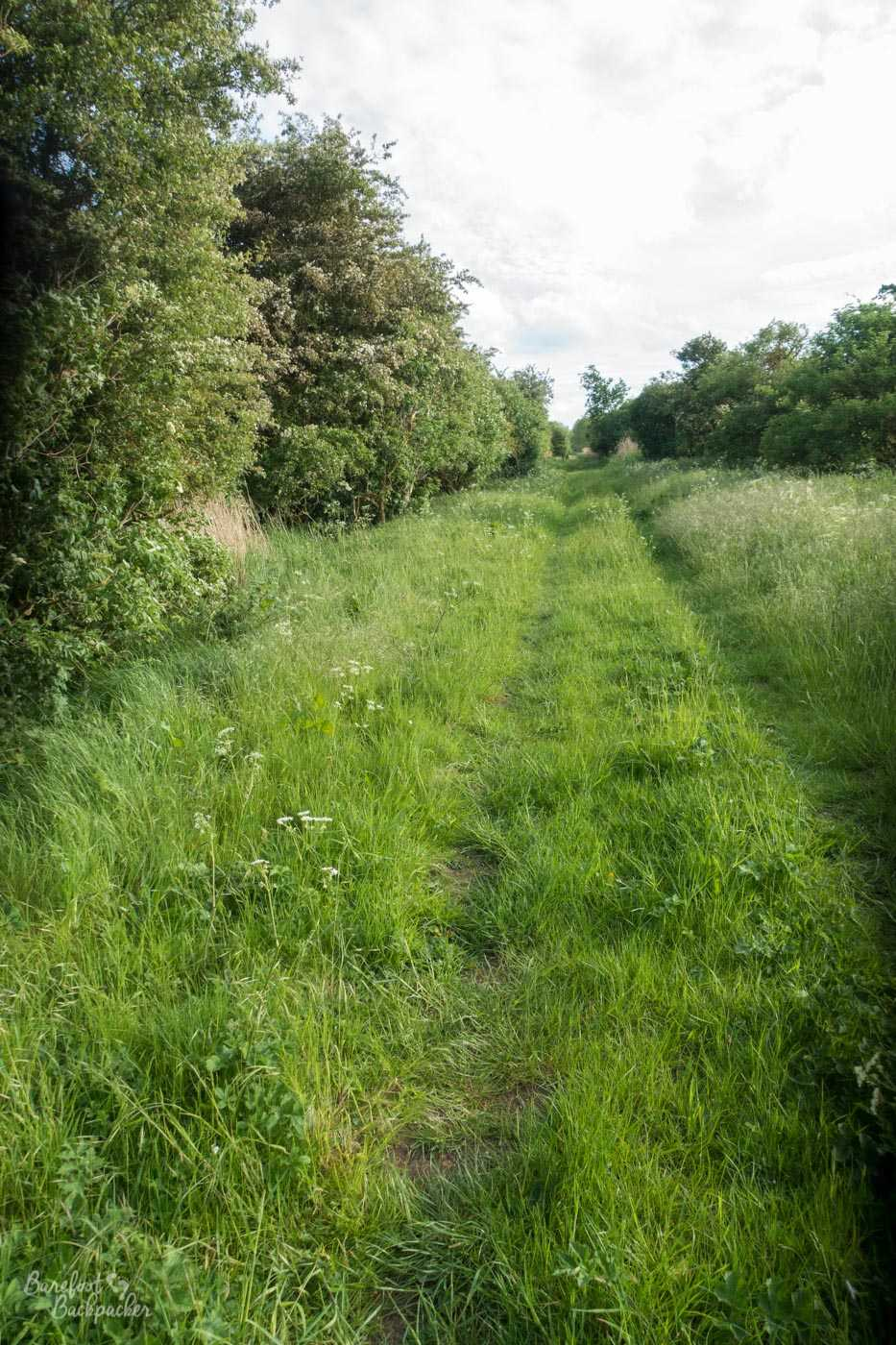 To the left is a large hedge. To the right is some overgrown grass and a line of bushes. In the grass, a trail made by a series of vehicles leads the way into the distance. This is very much Not The Norfolk Coast Path.